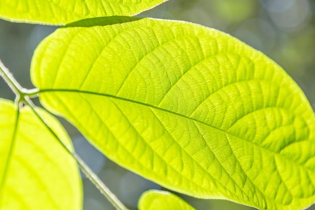 Vue rapprochée de la feuille verte. fond naturel