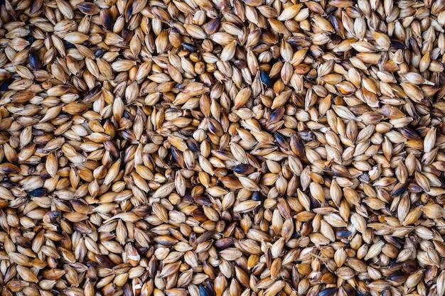 Vue rapprochée des grains d'orge torréfiés. ingrédient pour la bière ou le kvas. fond et texture des grains frits