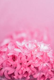 Vue rapprochée de jacinthe délicates fleurs roses sur fond rose, flou. concept de vacances, célébration, journée de la femme, fête des mères