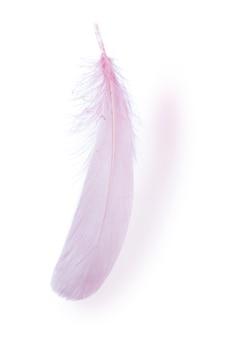 Vue rapprochée d'une plume rose sur fond blanc.