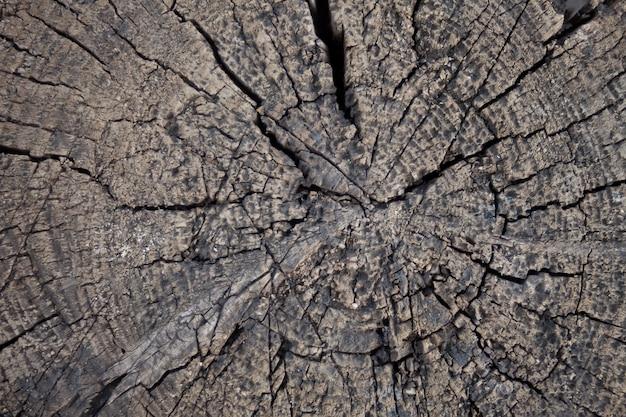 Vue rapprochée d'une souche d'arbre âgée avec des anneaux