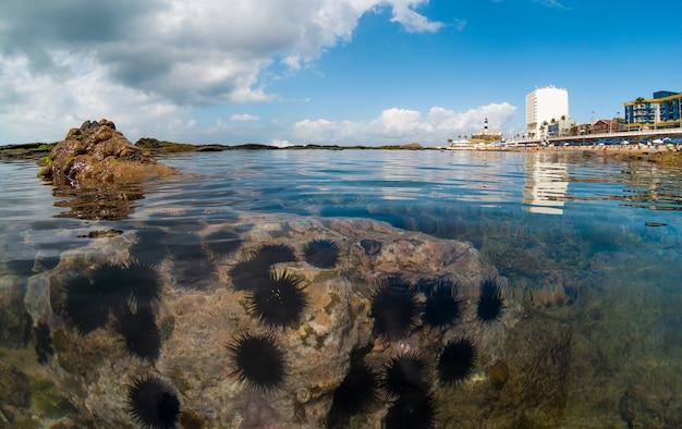 Vue sur les récifs coralliens à praia da barra à salvador bahia au brésil.