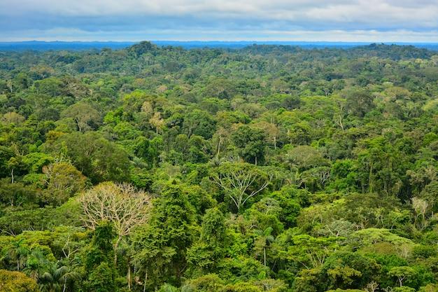 Vue de la région amazonienne