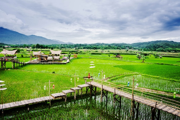 Vue des rizières et des montagnes et de la cabane à wat phuket