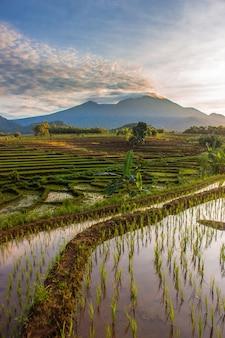 Vue sur les rizières avec soleil le matin sur de hautes montagnes en indonésie