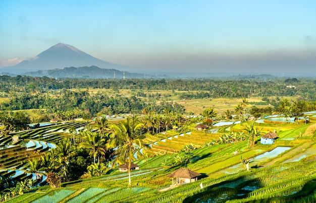 Vue sur les rizières en terrasses de jatiluwih à bali, indonésie