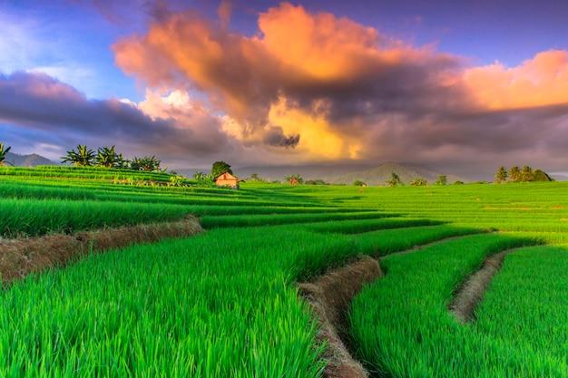 Vue sur les rizières vertes avec un beau ciel dans le nord de bengkulu, indonésie