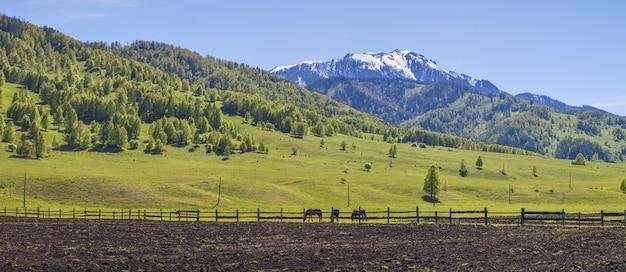 Vue rurale printanière, montagnes et terres arables