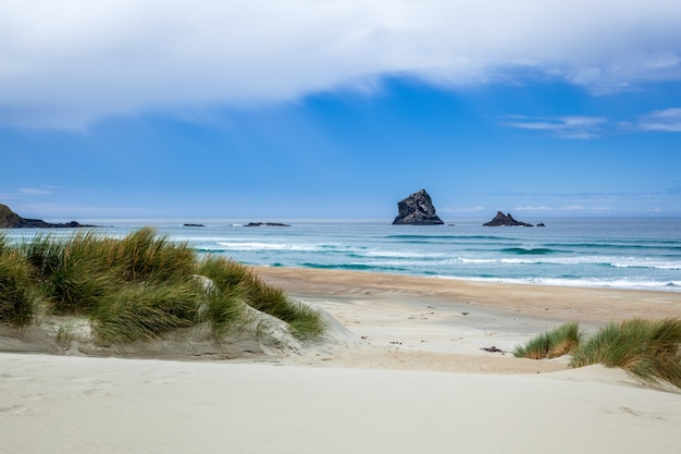 Vue de sandfly bay dans l'île du sud de la nouvelle-zélande