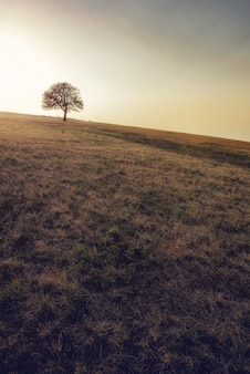Vue d'un seul arbre poussant sur le pré à mountain rajac, serbie
