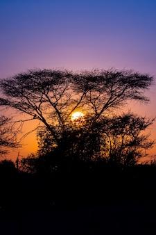Vue silhouette de la forêt d'arbres carquois avec beau ciel coucher de soleil crépuscule scène du ciel à keetmanshoop, namibie.