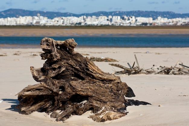 Vue d'une souche d'arbre abandonné sur la plage.