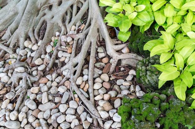 Vue sous les arbres dans le jardin avec des branches de racines.