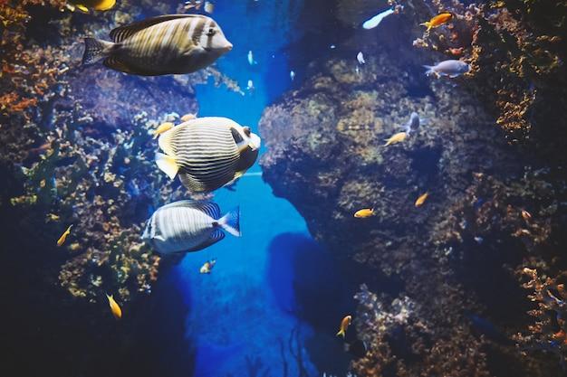 Vue sous l'eau de poissons de mer colorés