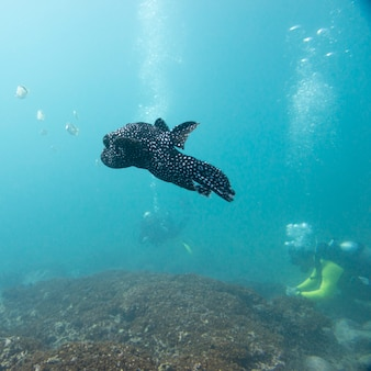 Vue sous-marine du poisson avec des plongeurs, ixtapa, guerrero, mexique