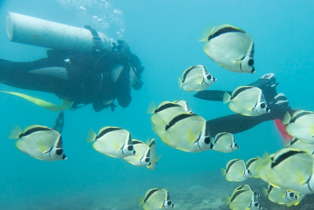 Vue sous-marine de l'école de poisson avec des plongeurs, ixtapa, guerrero, mexique