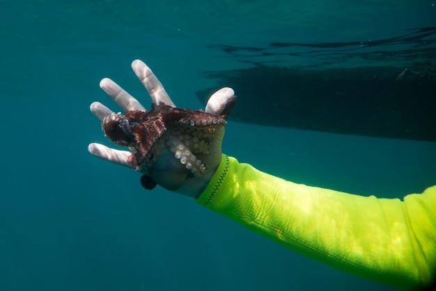 Vue sous-marine, de, plongeur, attraper, poulpe, ixtapa, guerrero, mexique