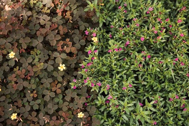 Vue surélevée de fleurs jaunes et roses en fleurs