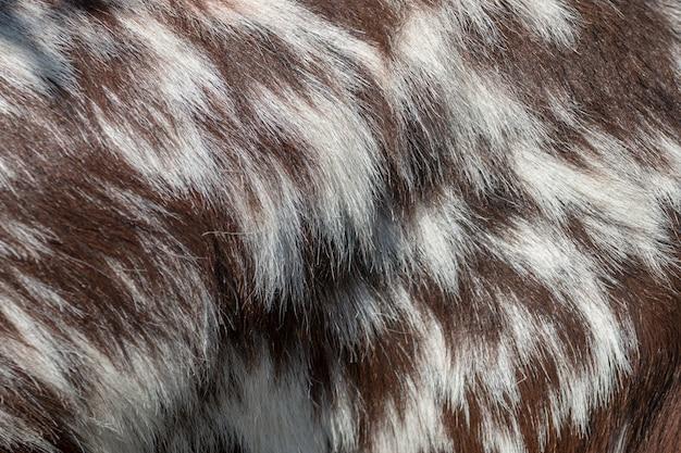 Vue d'une texture de fourrure de chèvre brune et blanche.