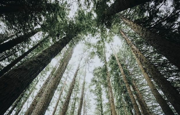 Vue vers le ciel dans une forêt