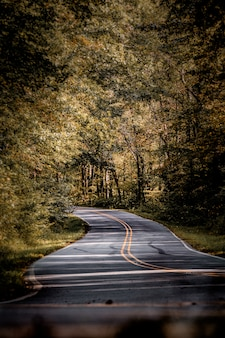 Vue verticale d'une route entourée d'une forêt d'automne