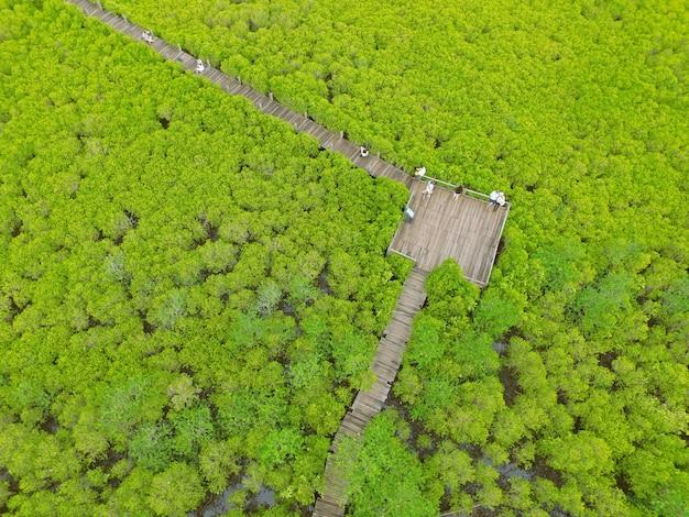 Vue à vol d'oiseau de la forêt de mangroves sillonnée avec de nombreux visiteurs