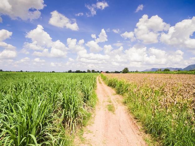 Vues aériennes des champs et des parcelles agricoles, plantations de canne à sucre