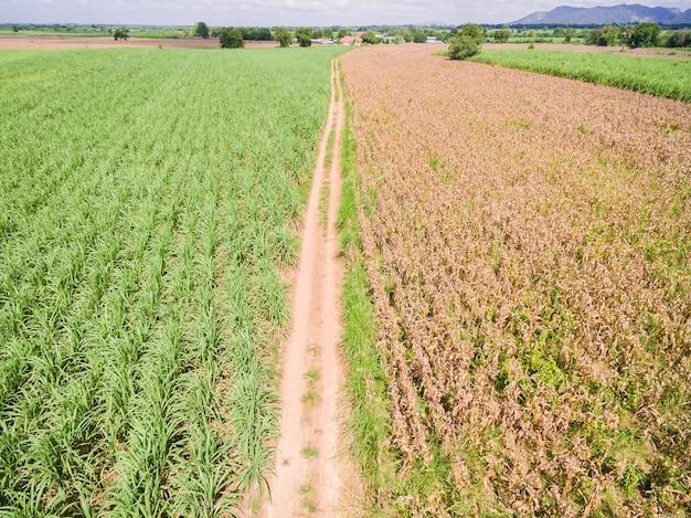 Vues aériennes des champs et des parcelles agricoles