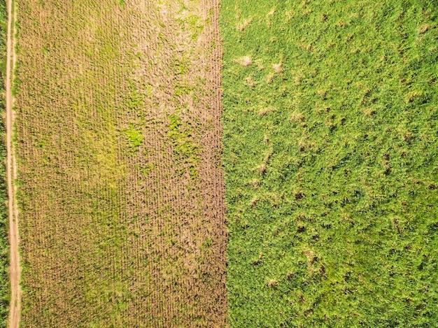 Vues de dessus, vues aériennes des champs et des parcelles agricoles, plantations de canne à sucre