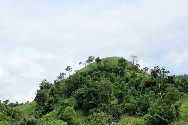 Vues sur la montagne et champs de maïs lumineux. le jour de la rosée montagnes et champ de maïs dans le