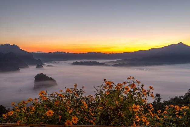 Vues de montagne et de fleurs du parc national de phu langka, thaïlande