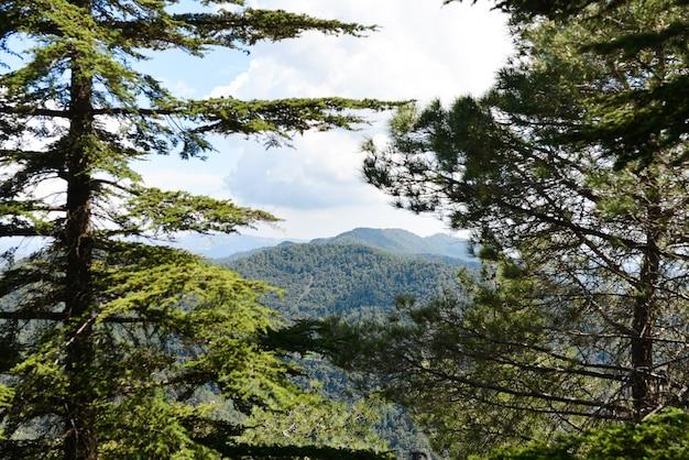 Vues sur les montagnes de troodos du haut à chypre.arbres verts.