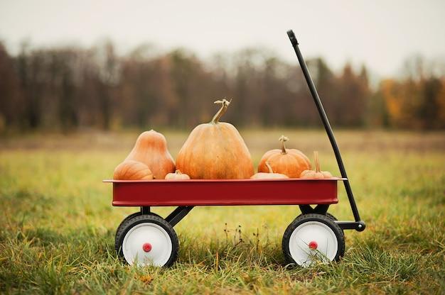 Wagon rouge avec beaucoup de citrouilles