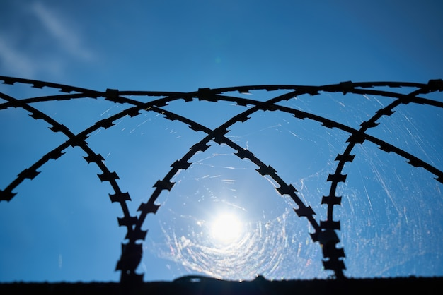 Web dans une grille métallique