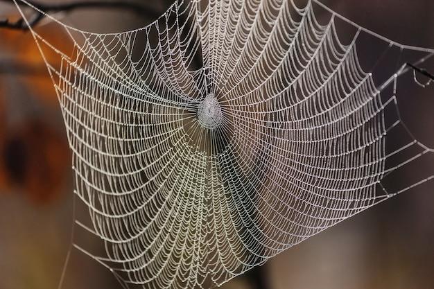 Web humide dans la forêt. halloween et fond d'automne.