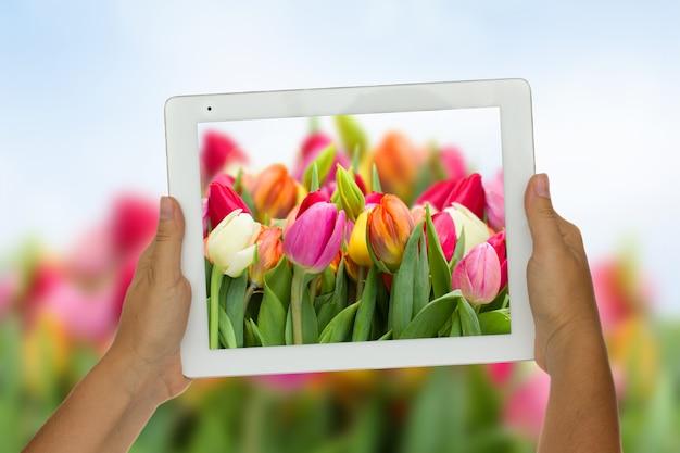 Woman hand holding tablet contre fond de fleurs de printemps