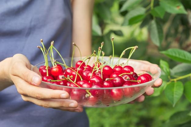 Womans hands holding bol de cerises rouges fraîches et mûres
