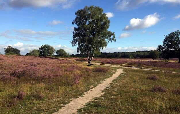 Woods près d'amsterdam pendant le verrouillage en raison des mesures de covid 19 2020