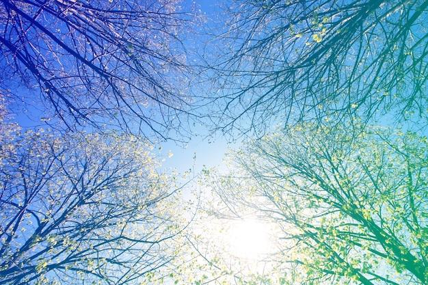 Worm's eye voir les arbres en ciel