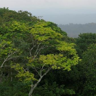 Xunantunich, jungle