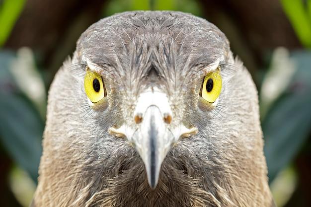 Les yeux à la recherche de l'aigle