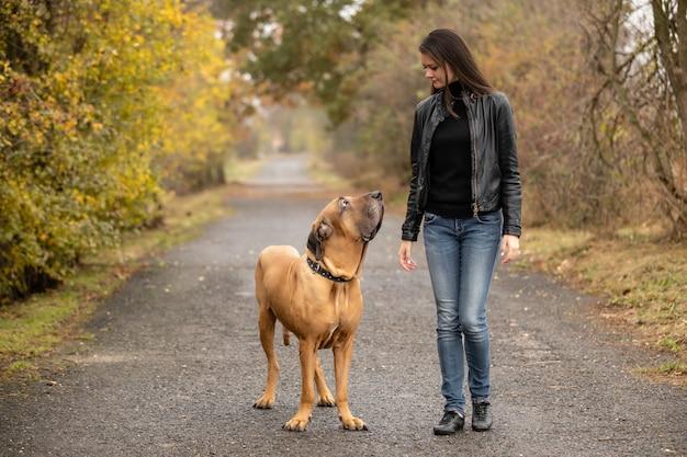 Yong femme avec gros chien fila brasileiro race in autumn park