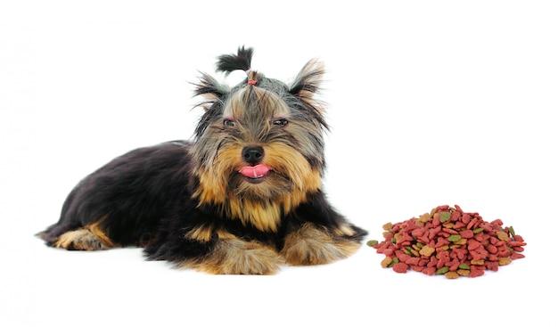 Yorkshire terrier et nourriture pour chiens sur fond blanc