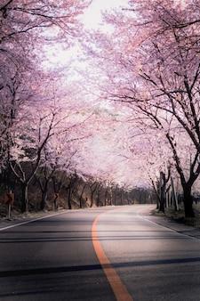 Zempukuji parkland of cherry tree snowstorm