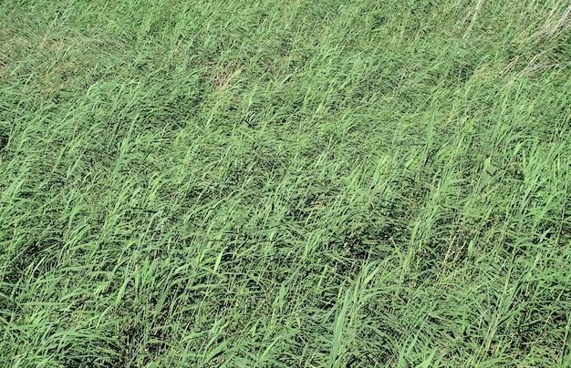 Zone humide avec des roseaux ondulés