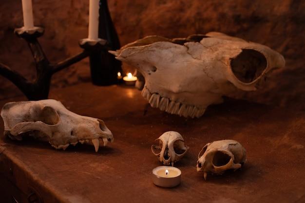 Zone photo dans le studio pour halloween. dramatique intimidant, décor pour la toussaint