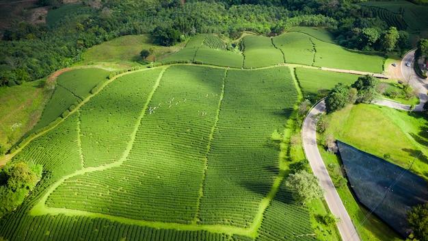 Zone verte de thé sur la montagne de chiang rai en thaïlande