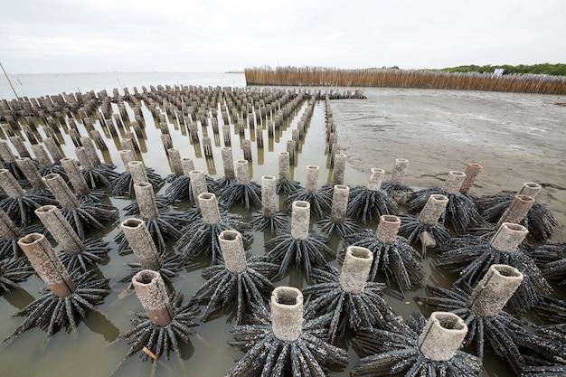 Zones de forêts de mangroves artificielles à des fins de conservation.