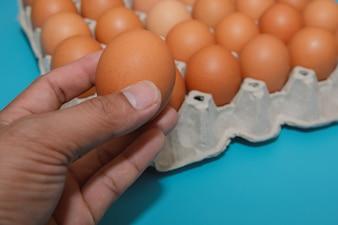 Avoir un œuf de poule dans un plat à œufs sur fond bleu.