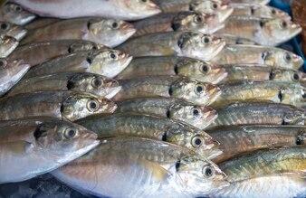 Beaucoup de fruits de mer de poisson frais dans le fond du marché intérieur
